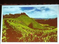 Paesaggi del vino.