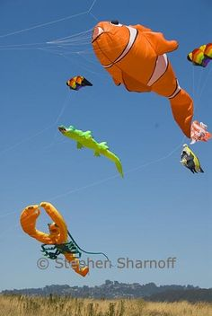 Fish kites! Can't wait to try ours at the beach during the winter:D