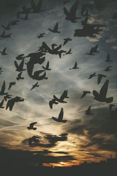 Many birds fly in silhouette. Image Nature, Beautiful World, Nature Photography, In This Moment, Places, Photos, Pictures, Blank Space, Wallpapers