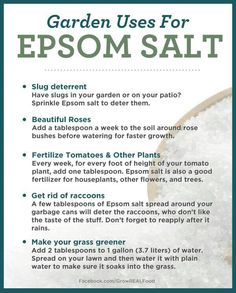 Good info about the Garden uses of Epsom Salts