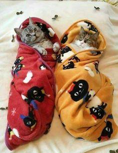 cat �