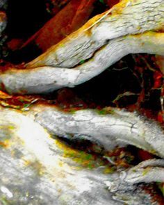 Careless Caress an abstract nature print by TheGlasArc on Etsy, $50.00