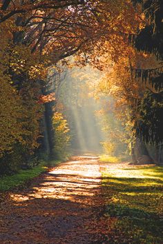 Beautiful path Jülich, FranceAndrea Fettweis The post Beautiful path Jülich, FranceAndrea Fettweis autumn scenery appeared first on Trendy. Beautiful World, Beautiful Places, Beautiful Pictures, Landscape Photography, Nature Photography, Autumn Scenery, Autumn Day, Autumn Walks, Autumn Nature