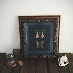 Vintage Real Butterfly Madagascar Moth Framed Insect Taxidermy Oddities #homedecor #eclectic