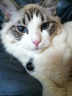 """""""In the beginning, God created Man, but seeing him so feeble he gave him the Cat."""" --Warren Eckstein"""
