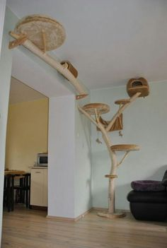cat superhighway shelves and climbers | Cats, just a sideways step from the wild.