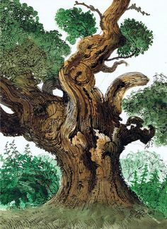 David Gentleman (British, b. 1930), Oak Tree