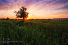 The small meadow by Magic_Med  nikon d800 hdr landscape trees grass green poppy field sun sunset sunrise sky clouds small meadow Th