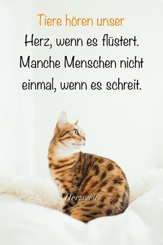 Wir beide spüren dad Herz des anderen doch sofo… Animals are good soul-keepers. Crazy Cat Lady, Crazy Cats, Animals And Pets, Funny Animals, Funny Animal Pictures, My Animal, Wise Words, Cute Dogs, Qoutes