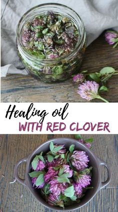 Red clover oil to improve the elasticity of your skin - There has been clinical evidence that isoflavonoids that are present in red clover help slow down s - Healing Oils, Healing Herbs, Natural Healing, Natural Oil, Wound Healing, Natural Foods, Natural Products, Natural Beauty, Natural Home Remedies