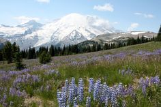 Mt. Rainier Nat. Park.  This is really something to see