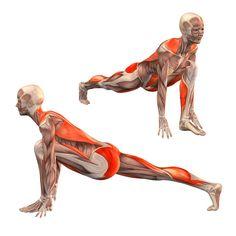 Low lunge, right leg straight - Utthita Ashva Sanchalanasana right - Yoga Poses | YOGA.com