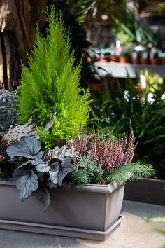 Outdoor Flowers, Diy Garden, Plants, Container Plants, Outdoor Christmas Planters, Beautiful Flowers, Flower Pots Outdoor, Garden Boxes, Planters