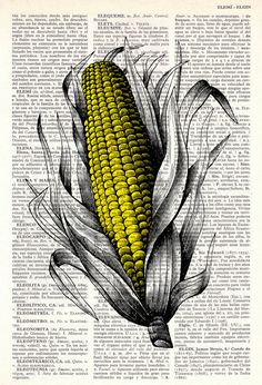 Corncob Maize Illustration Print on Vintage Dictionary by PRRINT