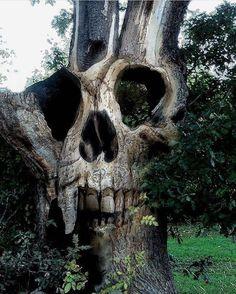 "Polubienia: 9,636, komentarze: 18 – Logo by @blackveiltattoo (@darkartistries) na Instagramie: ""Dead tree by All Mighty Steve on Deviant Art via @homesweethell #goth #gothgirl #gothgoth…"""