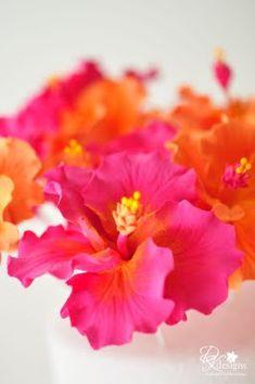 fuchsia pink and bright orange hibiscus flowers