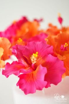 fuchsia pink and bright orange hibiscus flowers