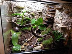 Building a dart frog viv. One day, when I have a lot more free time and money!