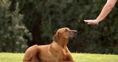 CLICKER TRAINING PER CANI: METODO DI ADDESTRAMENTO