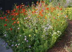 Wilde bloemenpracht: wilde planten in Nederland en België (lijsten)