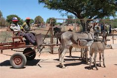 Deben Wind Mills, Donkeys, African Art, Continents, Farm Animals, South Africa, Cart, Landscapes, To Go