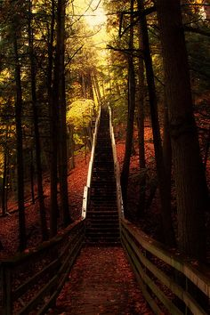 Descending into the heart of the autumn Forest....Largo Springs, Michigan