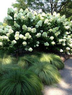 My Favorite Plant Combinations 21 #gardenshrubslandscaping