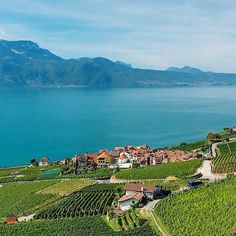 Lavaux, Switzerland 7 Incredible Places to Visit If You Love Wine via