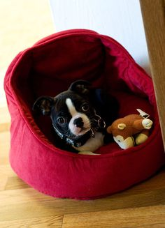 Boston Terrier puppy. Seriously?! Wrigley NEEDS a little sister! Look at that FACE
