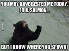 I will find you, salmon!