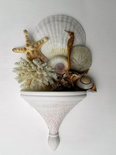Wall sconce displays shell collection