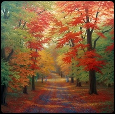 1000 Images About Country Lanes On Pinterest Country