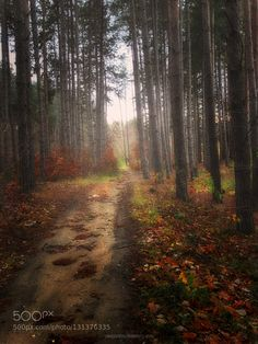 On the forest... by dib067. @go4fotos