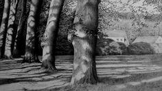 https://flic.kr/p/6rB8xh | Hirschpark in Hamburg - Blankenese | Pencildrawing -2009 29,5 x 51,5 cm   Sold
