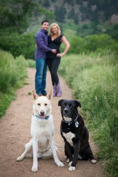 outdoor maternity photos with dog - Google Search