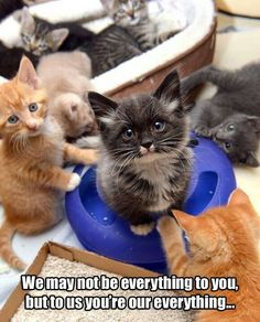 Awww.  Only you can keep them safe, fed, loved and protected.  They depend on YOU to provide Food and Fresh Water, Clean Litter Boxes.  And they will Love you back unconditionally.