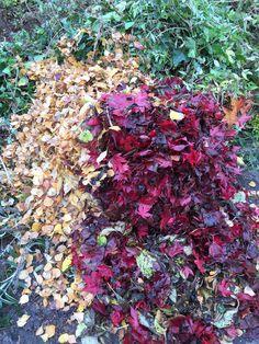 Laubhaufen im Herbst! #gartenblog #laub #herbst Cabbage, Vegetables, Sidewalk, Fall Leaves, Mushrooms, Vegetable Recipes, Veggie Food, Cabbages, Collard Greens