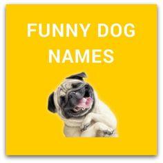 Girl Dog Names For Gsp