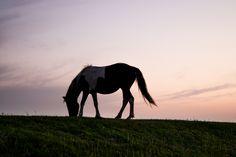 Cavalo silhueta horizonte- AN 215