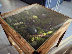Indoor Garden, Indoor Plants, Terrarium Table, Terrarium Ideas, Terrariums, Garden Coffee Table, Coffee Tables, One Word Art, Moss Garden