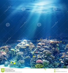 Photo about Sea or ocean underwater coral reef snorkeling or diving background. Image of ocean, fauna, bottom - 39769167 Ocean Underwater, Sea And Ocean, Snorkeling, Diving, Coral, Photos, Image, Scuba Diving, Cake Smash Pictures