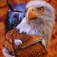 eagle Animal Sketches, Animal Drawings, Pretty Birds, Beautiful Birds, Native American Indians, American Flag, Eagles, Daddy Tattoos, Eagle Drawing