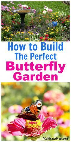 Garden Planning How to Build a Butterfly Garden- It's really easy to start a butterfly garden! All butterflies need is food, water, and shelter. Take a look at this guide on how create a butterfly garden in your yard! It's easy, and a lot of fun! Diy Garden, Garden Landscaping, Shade Garden, Potager Garden, Landscaping Software, Asian Garden, Garden Sets, Outdoor Garden Decor, Garden Fencing