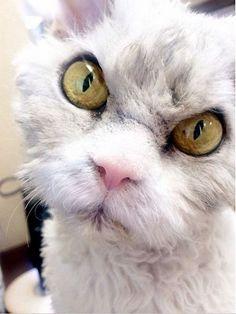 Albert cat pics