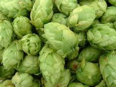 Growing hops in your own yard for beer brewing appears to be a rewarding aspect of the hobby of homebrewing. Read about other homebrewer's experience growing their own hops. Healing Herbs, Medicinal Herbs, Beer Brewing, Home Brewing, Hops Extract, Citra Hops, Beer Hops, Brewing Equipment, Natural Treatments