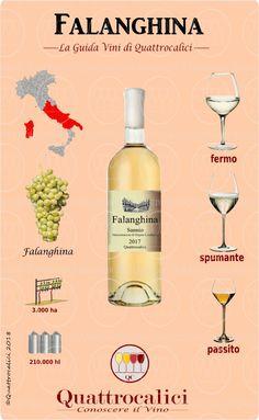 I Vini Erbaluce dei produttori della Guida Quattrocalici, la descrizione e i Vini selezionati