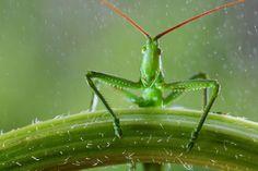 Il prend des photos magiques des plus petites créatures de la nature | Buzzly