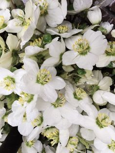 Hellebores are flourishing in Copenhagen.