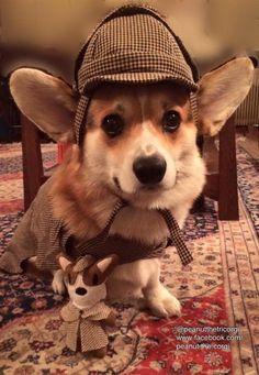 Sherlock Corgi!