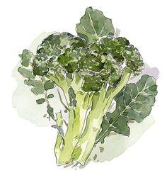 How to grow broccoli :: Gourmet Traveller